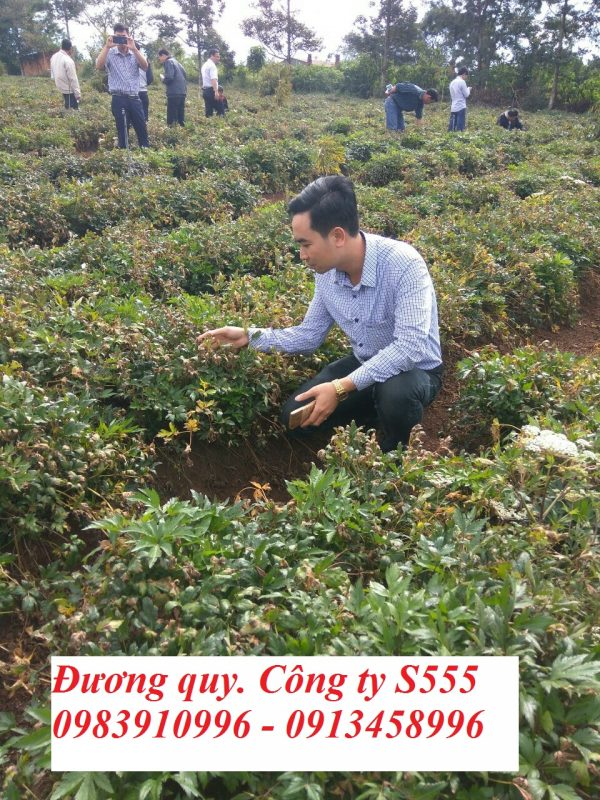 cay-duong-quy